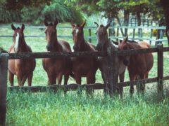 scheerapparaat paard